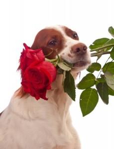 dog holding roses